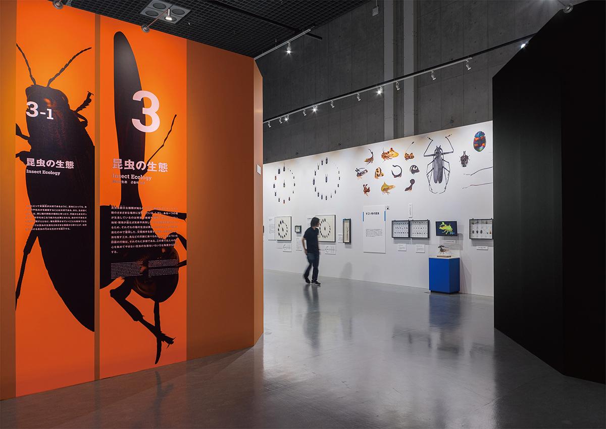 国立科学博物館 特別展 昆虫