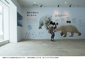 札幌市円山動物園ホッキョクグマ館